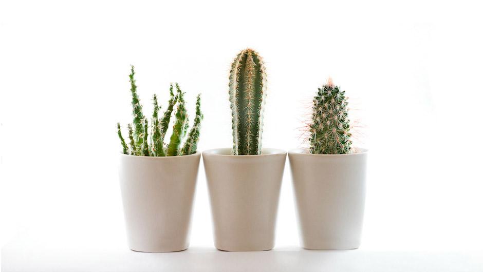 cacti1_big